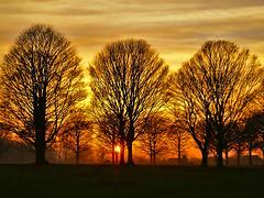 Avenue Sunset (algo) Tags: sunset trees avenue algo halton england sun bravo 200750plusfaves topf50 topv111 magicdonkey artlibre topv333 topf100 topv999 topv1111 811 topf200 topv2222 topf300 gold orange black light clouds cloud sky brown photography 50f 100f 200f 300f