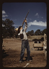 Mr. Leatherman, homesteader, shooting hawks wh...