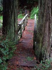 20080109 Bridge