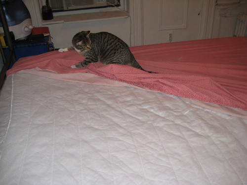 buster helps make the bed