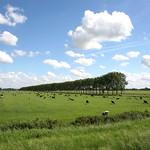 Beemster: Volgerweg westdijk