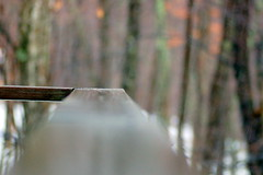 Rain, Rain Go Away (Emmy Gee) Tags: trees cold rain woods dof deck railing