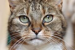 Toni (Eisbeertje) Tags: cats animal animals cat leiden nikon katten kat nederland katze dieren dier tier d40 tieren