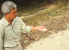 Fine Sand in Mangrove