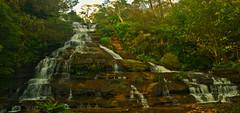 DSC_2179_2-hdr (lee the smurffrog) Tags: landscapes waterfall nikon australia tasmania d80