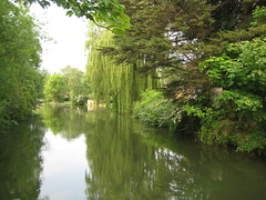 willows reflected in quiet water