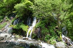 川俣川渓谷20080527