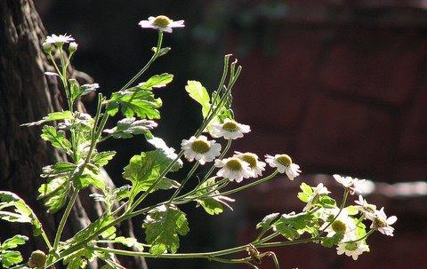 backlit wildflowers kodai cottage carlton 240508