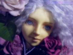 Zhion with my roses (borometz) Tags: color art rose doll purple vampire gothic fantasy bjd    custom volks 13  sakaki balljointdoll    60cm  kyotenshi   zhion