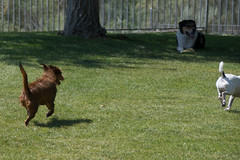 (Pete Finlay) Tags: dog pool charlie henry lorri aguadulce detachedmind petefinlay
