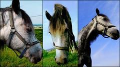 Meet Dori (andreas n) Tags: horse ride hellas free greece macedonia grecia griechenland naousa grece veria veroia meetdori dorithehorse