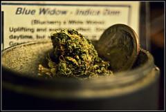 (The Prof.) Tags: blue weed dime bud marijuana widow grinder chronic dank indica nug bluewidow