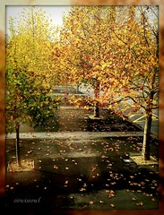 Autumn View From The CLM Gym Window (sirwiseowl) Tags: autumn trees window leaves view walkway gym footpath picnik masterton wairarapa beautyunoticed