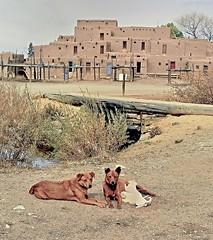 Taos Pueblo, New Mexico, November 19, 2001 (Ivan S. Abrams) Tags: arizona newmexico dogs animals canon ivan getty abrams gettyimages ih taospueblo 30d smörgåsbord tucsonarizona nativeamericandwellings 12608 southwestunitedstates onlythebestare ivansabrams trainplanepro pimacountyarizona safyan arizonabar arizonaphotographers ivanabrams cochisecountyarizona tucson3985 peachofashot gettyimagesandtheflickrcollection copyrightivansabramsallrightsreservedunauthorizeduseofthisimageisprohibited tucson3985gmailcom ivansafyanabrams arizonalawyers statebarofarizona californialawyers copyrightivansafyanabrams2009allrightsreservedunauthorizeduseprohibitedbylawpropertyofivansafyanabrams unauthorizeduseconstitutestheft thisphotographwasmadebyivansafyanabramswhoretainsallrightstheretoc2009ivansafyanabrams abramsandmcdanielinternationallawandeconomicdiplomacy ivansabramsarizonaattorney ivansabramsbauniversityofpittsburghjduniversityofpittsburghllmuniversityofarizonainternationallawyer