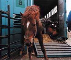 Kinship Circle - 2007-10-07 - Horse Slaughter 03