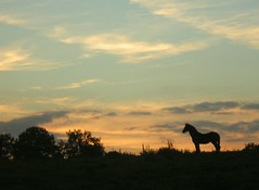 Wild horses (zenera) Tags: sunset wild horses love nature beautiful animal silhouette clouds hope evening lyrics nikon pretty mare quiet peace song zenfli magic promise rollingstones wildhorses foal horison