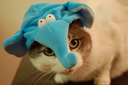 Kittyphant1