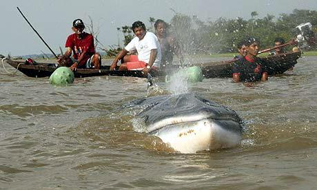 whale-amazon-reuters