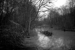 Baggeridge (swissrolli) Tags: park england 120 film pool mediumformat woods track fuji path delete7 wetlands 6x9 save10 f56 savedbythedeltemeuncensoredgroup ilford delta400 blackcountry dmu 65mm baggeridge 160s gsw690iii bigpicture2008