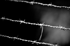 Barbed Wire (mgratzer) Tags: blackandwhite bw white black dark wire barbedwire barbed showonmysite