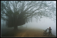 An Exotic & solitary Morning [..Chuadanga, Bangladesh..] (Catch the dream) Tags: road morning boy tree nature fog composition rural bravo village bongo exotic faded fade bengal bangladesh bangla oblivion bengali banyantree bangladeshi bangali golddragon mywinners abigfave catchthedream gettyimagesbangladeshq2