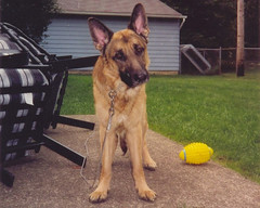 Goliath, as a youngster