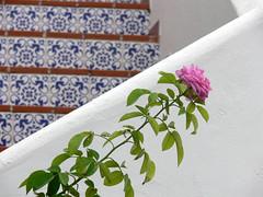 IBIZA: rosa (waltermo) Tags: mare ibiza spiaggia vacanza theworldinpink