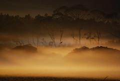 Early Morning Hunting (teddypetal) Tags: morning sunrise landscape hawk hunting flickrsbest abigfave platinumphoto anawesomeshot aplusphoto diamondclassphotographer flickrdiamond goldstaraward naturethroughthelens flickrlovers grouptripod
