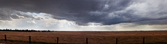 Breaking storm, Madera County, California  2011 (john oconnor) Tags: california light storm color nature rain horizontal fence landscape evening spring madera afternoon cattle cows stitch horizon may dramatic panoramic fresno photomerge plains stormclouds hwy41 breakingclouds 9frames 9images breakinglight canoneos5dmarkii johnoconnorphotography