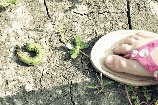 bug & foot