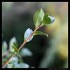 Bokeh (shutterBRI) Tags: autumn fall digital canon outside eos leaf nc branch dof bokeh northcarolina raleigh depthoffield dslr 2007 5014 shutterbri 40d brianutesch photofaceoffwinner pfogold brianuteschphotography