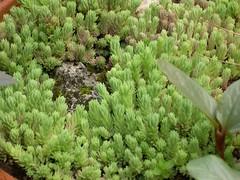 ortobotanico 333 (blum1) Tags: alberi fiori piante ortobotanico