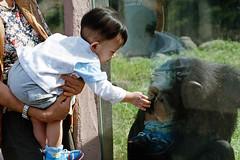 (ken0915) Tags: baby agfavista100 eos5 ef8518