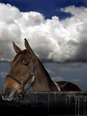 Fear of the Unknown (maggiedeephotographer) Tags: horse animal natureza fear natur dream natuur natura pony dreamy schwarzweiss fearful chevaux ctr maggiedee cavello creativehorseart