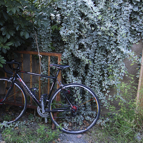 ivy and bicycle