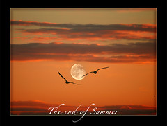 Flying to the moon.. (steve_steady64) Tags: sunset pordosol summer sky italy moon seagulls clouds lune mond fly tramonto nuvole sonnenuntergang estate sommer seagull himmel wolken olympus cu luna volo ciel cielo nubes verano nuvens lua romantic vero t nuages  gaviota zuiko gabbiani mouette ravenna gaivota puestadelsol cervia coucherdusoleil    romantisch       seemwe romantiques     stevegatto  2007stevegatto romnticas   villainferno romnticas