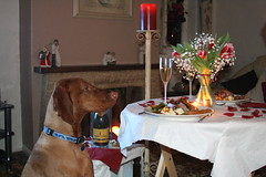 Happy Wedding Anniversary... (Woody Worth) Tags: puppy pointer woody vizsla 100views elaine worth pup kev visla weddinganniversary hungarian whitwick