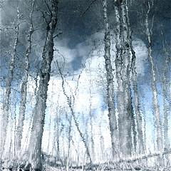 "My Wild River Blues…!!! (Denis Collette...!!!) Tags: blue trees cloud canada bravo quebec rivière bleu arbres chapeau nuage soe sauvage themoulinrouge portneuf firstquality bluetiful holidaysvacanzeurlaub pontrouge ""deniscollette"" impressivemood «wildriver» «johnlennon» «yerblues»"