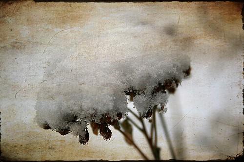Snow Series 6
