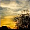 cuesta de moyano (cmedrang) Tags: madrid sunset sky tree backlight clouds contraluz atardecer cielo nubes árbol orton cuesta moyano aplusphoto