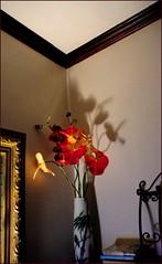 Corner (M'sheArt2 Photography) Tags: wood usa corner ma oak iron brighton shadows orchids books zen tiny frame crown sq moulding windowbox wrought glassvase anthuriums dsc1363 ms2