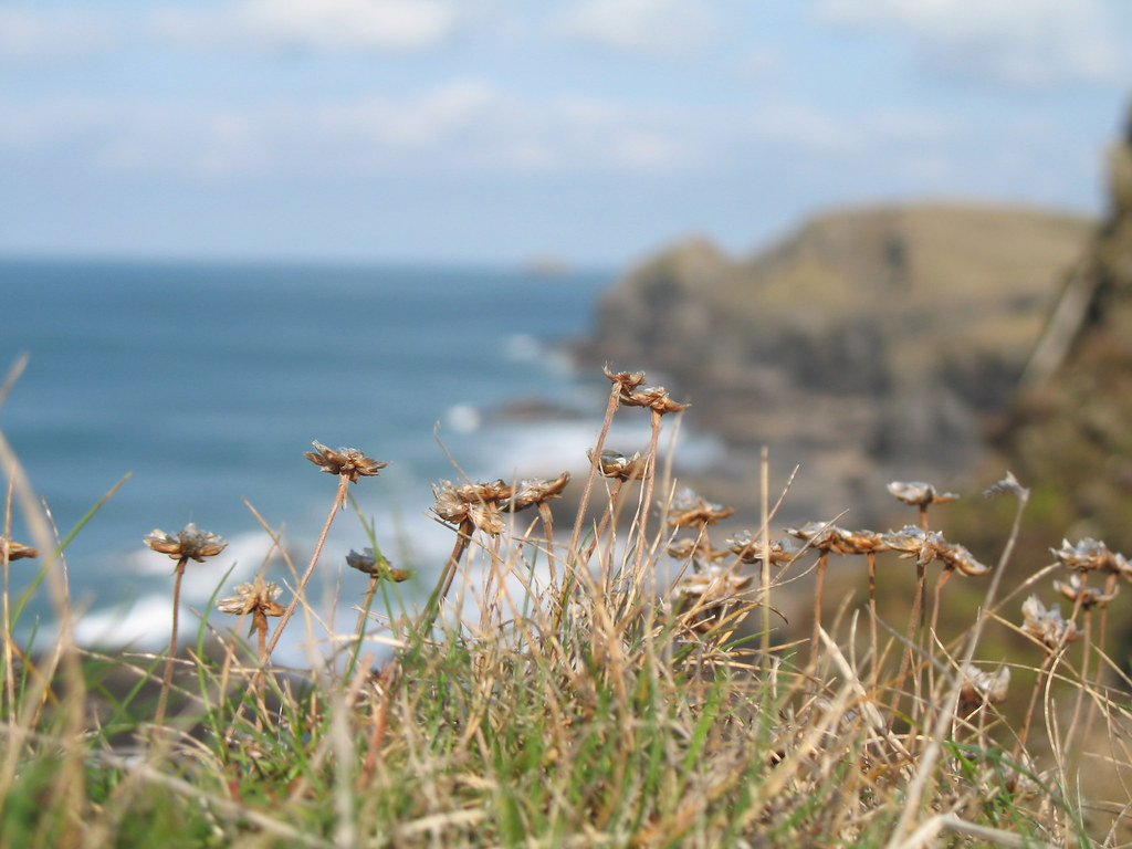 Edge of the clifftop