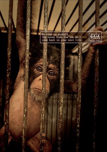 GAIA - Monkey