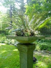 Fern Pedestal