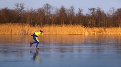 Speedskating next to the golden reed of Ankeveen (B℮n) Tags: wijdemeren ankeveense plassen ice skating ijspret ijs iceskating thenetherlands holland iceskate schaatsen waterland elfstedentocht natuurijs ijstochten wintertime skatingonnaturalice dutchskaters schaatseninwaterland skateoutdoor schaats schaatsgekte bevrorenmeer nearamsterdam wijwillenijsvrij dutch tradition seaofice polders sneeuw snow skates koekenzopie speedskaters frigidconditions cold winter hailing ijsoppervlakte dichtbevroren schaatsrijders schaatstocht genieten enjoy pleasure ijzers sunshine freeze noren klapschaatsen klapschaats skaters pootjeover nederland netherlands kids children fun sun sunset sync synchronized speedskater action speed fast reed riet