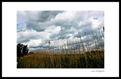 Skies over Holland ( WimKok) Tags: sky cloud holland reed clouds canon skies wolken lucht polder riet vlaardingen broekpolder hollandseluchten wolkenlucht dutchskies eos50d