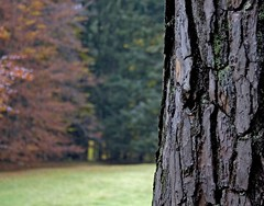 What's better than walking in an autumn wood ? (Seba.it) Tags: autumn trees italy mountain mountains alps fall montagne woods italia raw hiking alpen alpi montagna trentino montagnes escursionismo valsugana valdisella nountain