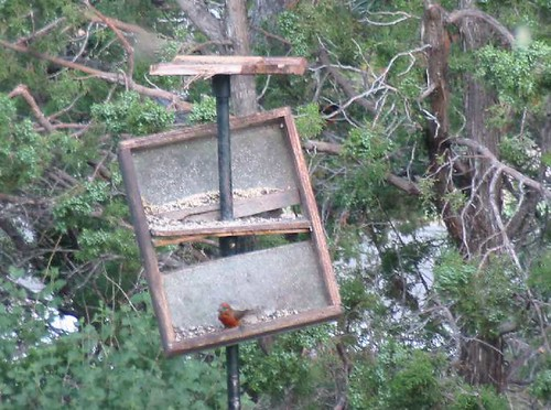 Bear Damage to Feeders