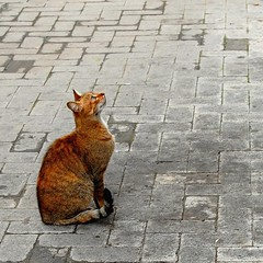 attesa (Antonio Ilardo) Tags: city urban italy cats nature colors animals cat italia natura sicily sicilia citt thebigone d40 supershot terminiimerese lanouvellerevolutionsurrealiste theexhibit bestofcats anawesomeshot thebiggestgroupwithonlycats coolestphotographers photodigitaldream