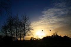 I'll show you a sunset (Gary*) Tags: park trees winter sunset sky sun cold nature birds countryside peace silhouettes cuip ampthill naturesfinest magicdonkey lovephotography 40d aplusphoto diamondclassphotographer